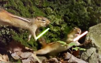 Jedi chipmunks : des écureuils se battent au sabre laser