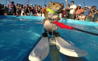 Vidéo : Twiggy l'écureuil champion de ski nautique en action