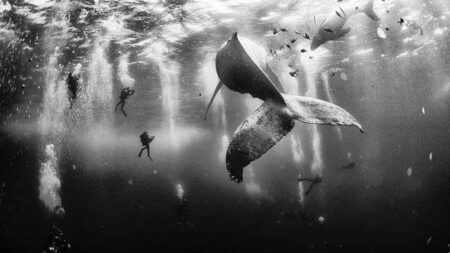 Whale Whisperers - Anuar Patjane