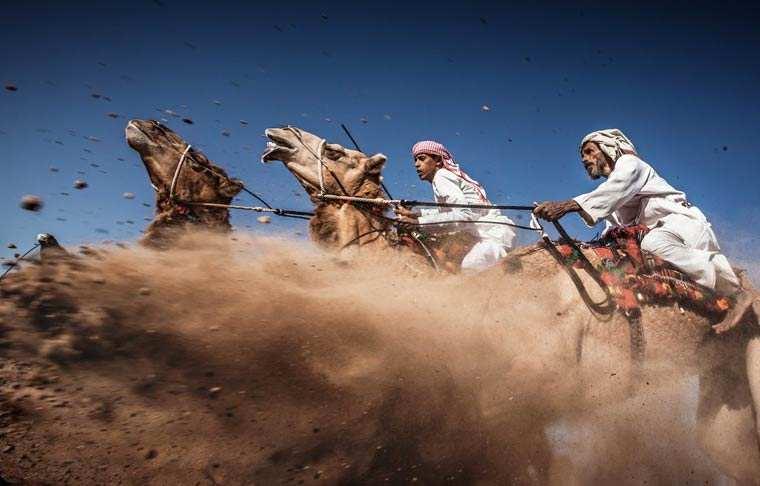 Camel Ardah - Ahmed Al Toqi