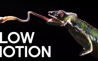 Vidéo : attaques mortelles de prédateurs en slow motion