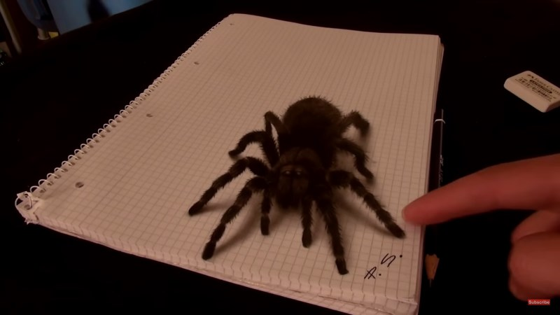 Illusion D Optique Les Dessins 3d Ultra Realistes De Stefan Pabst