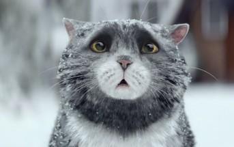 Pub de Noël 2015 : le chat maladroit mais attachant de Sainsbury