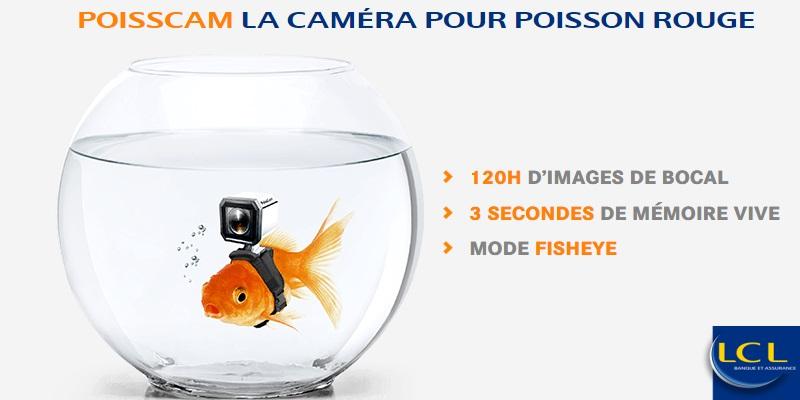 poisscam : la camera pour poisson rouge par LCL