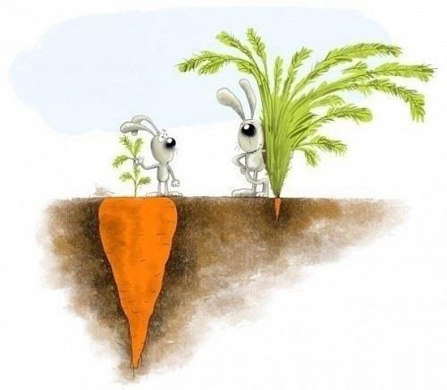 les-apparences-sont-trompeuses-13-lapin-carotte