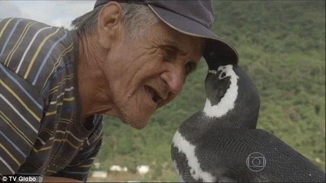 Joao-Pereira-de-Souza-ami-pingouin-Dindim