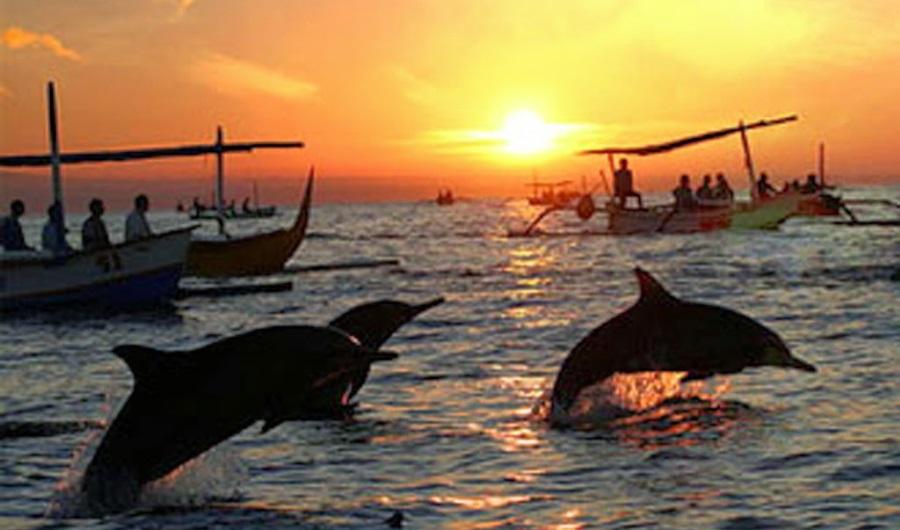 Nager avec les dauphins à Bali en Indonésie