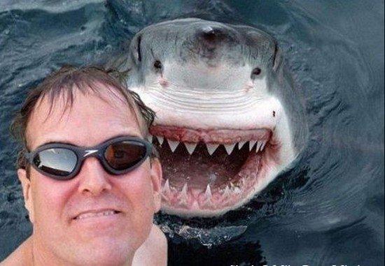 photo-prise-au-bon-moment-03-selfie-requin