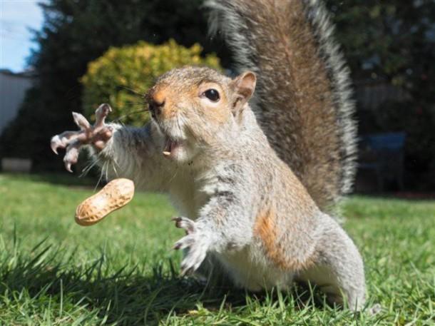 photo-prise-au-bon-moment-06-ecureuil