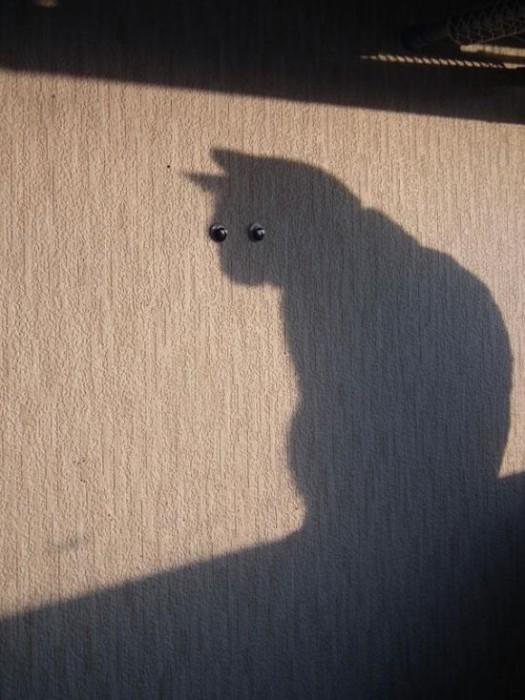 photo-prise-au-bon-moment-10-chat