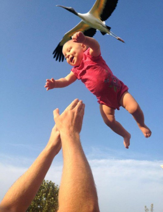 photo-prise-au-bon-moment-11-bebe-cigogne