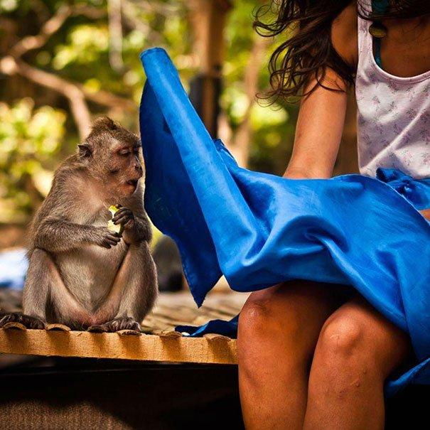 photo-prise-au-bon-moment-19-singe-jupe