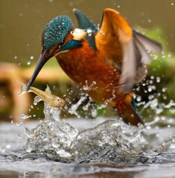 photo-prise-au-bon-moment-20-oiseau