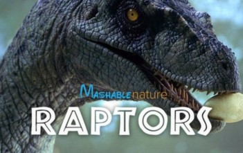 Mashable nature raptors