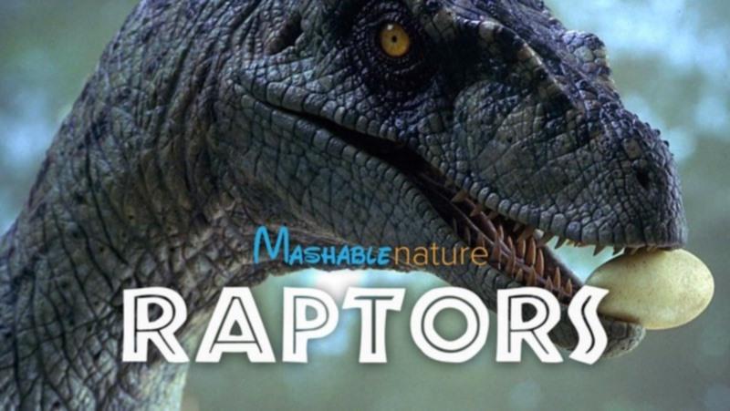Mashable nature raptors