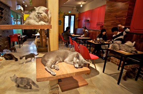 bar-paris-Cafe-des-Chats