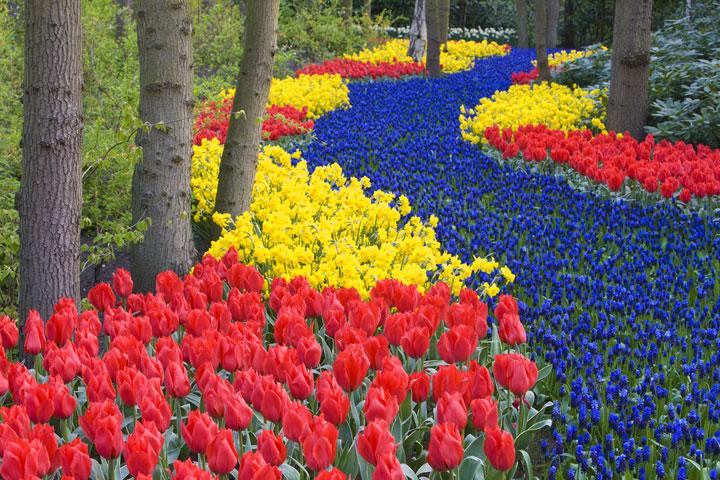 Un chemin de fleur à Keukenhof, Pays-Bas
