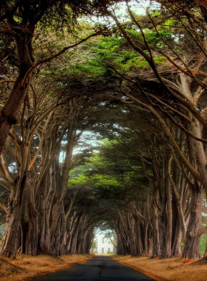 Le littoral National de Point Reyes, Californie, Etats-Unis