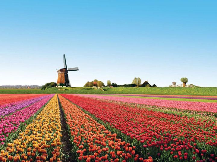 Les champs de tulipes en fleur, Pays-Bas
