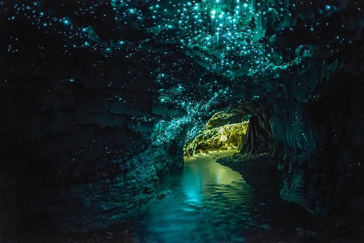 Les vers luisants des grottes, Nouvelle-Zélande