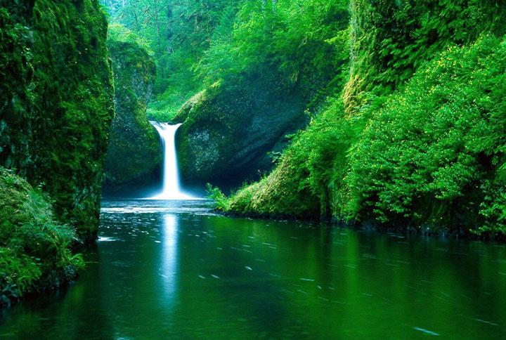 La forêt tropicale amazonienne, Amérique du Sud