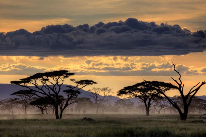 Serengeti en Tanzanie, Afrique