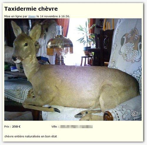best-of-petites-annonces-insolites-web-02-taxidermie-chevre