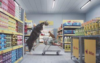 WTF : les chats stars du web font leurs courses chez Netto !
