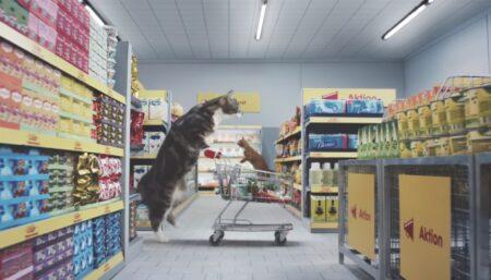 Des chats font leurs courses avec leur caddie dans la pub Netto-Katzen