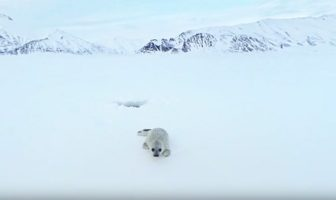 A Journey to the Arctic - Greenpeace