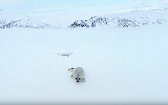 Réalité virtuelle : le voyage à 360° en Arctique de Greenpeace