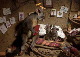 Un opossum explique à ses enfants pourquoi les humains sont si dangereux