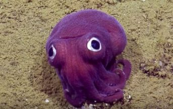 Cette pieuvre violette aux allures de pokemon fait le buzz sur le web