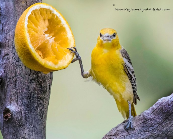 comedy-wildlife-photo-2016-19
