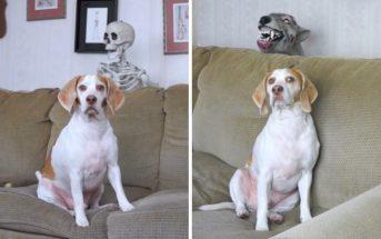 Halloween 2016 : un chien piégé par un squelette et un chien-zombie