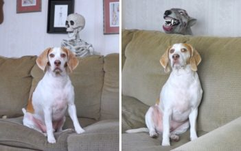 halloween chien zombie squelette