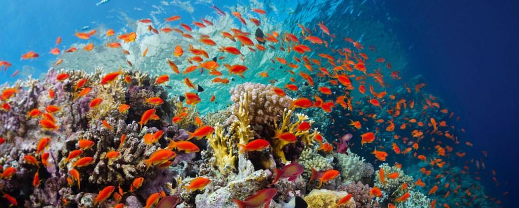 plongée Egypte en mer rouge