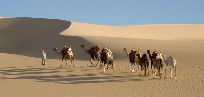 randonnée avec chameau dans le désert blanc en Egypte