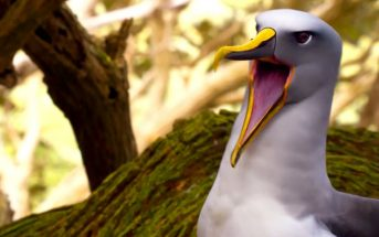 Et si les animaux criaient avec une voix humaine ?