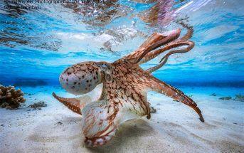 Les plus belles photos sous-marines du concours 2017