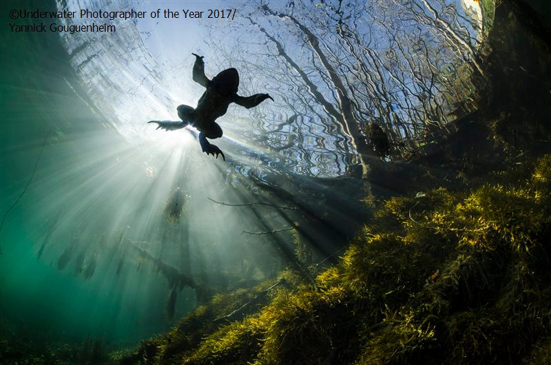 Wide Angle HIGHLY COMMENDED: Prince of the waters by Yannick Gouguenheim