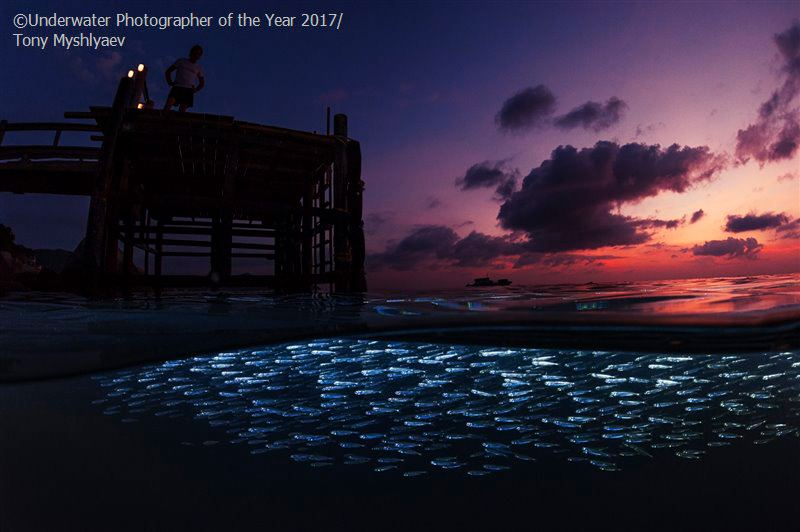 Wide Angle COMMENDED: Silversides at Twilight by Tony Myshlyaev
