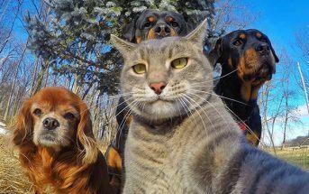 20 photos très drôles d'animaux qui se prennent en selfie