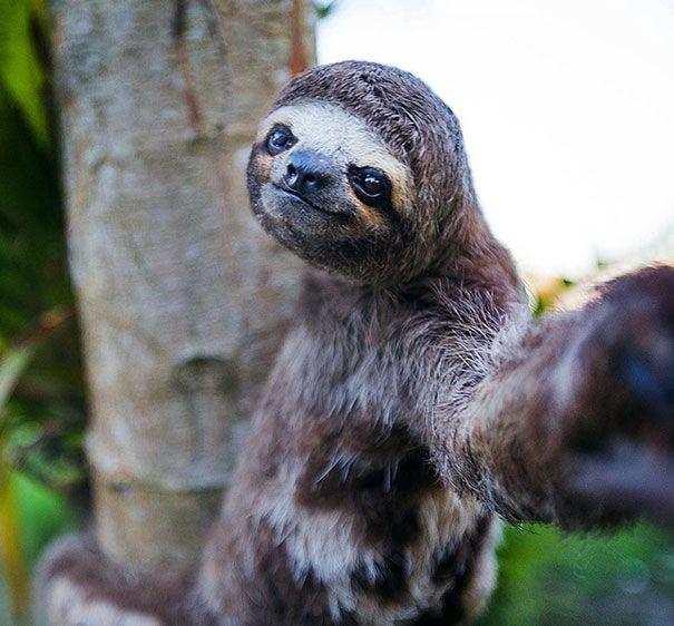 Populaire 20 photos très drôles d'animaux qui se prennent en selfie TH89