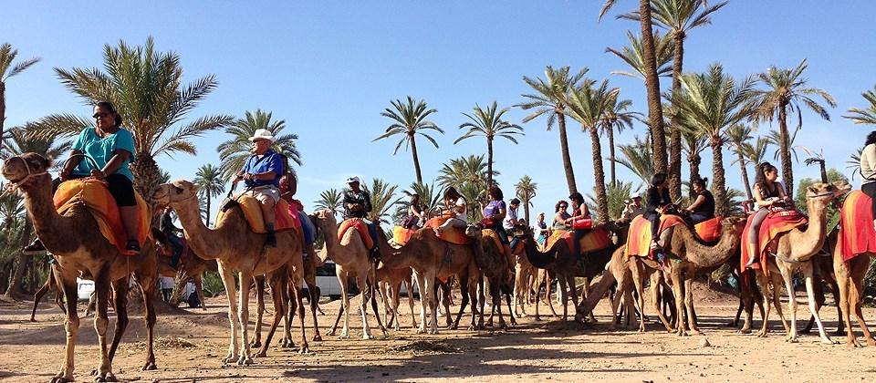Randonnée dans la palmeraie à dos de dromadaires à Marrakech