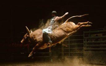 Weightless : la ruade d'un taureau de rodéo filmée en slow motion