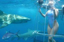 Molly Cavalli mordue requin