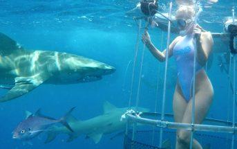 Vidéo : l'actrice porno Molly Cavalli mordue au pied par un requin !
