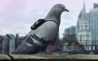 Pigeon Air Patrol : des pigeons mesurent la pollution à Londres