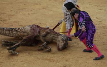 Des toréadors affrontent des dinosaures dans un spot anti-corrida